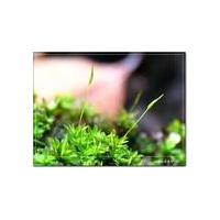 苔藓植物蛋白可为干细胞技术改良提供线索
