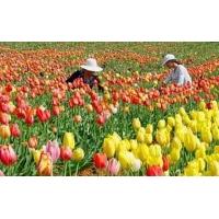 福建海峡花卉集散中心规划方案出台